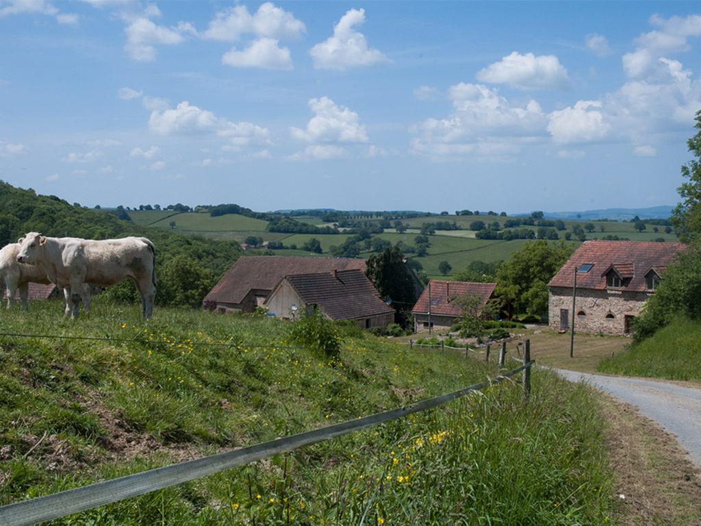 uitzicht op la cave met koeien